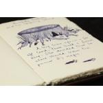 Рукописная книга Джоан Роулинг ушла с молотка почти за $470 тыс.
